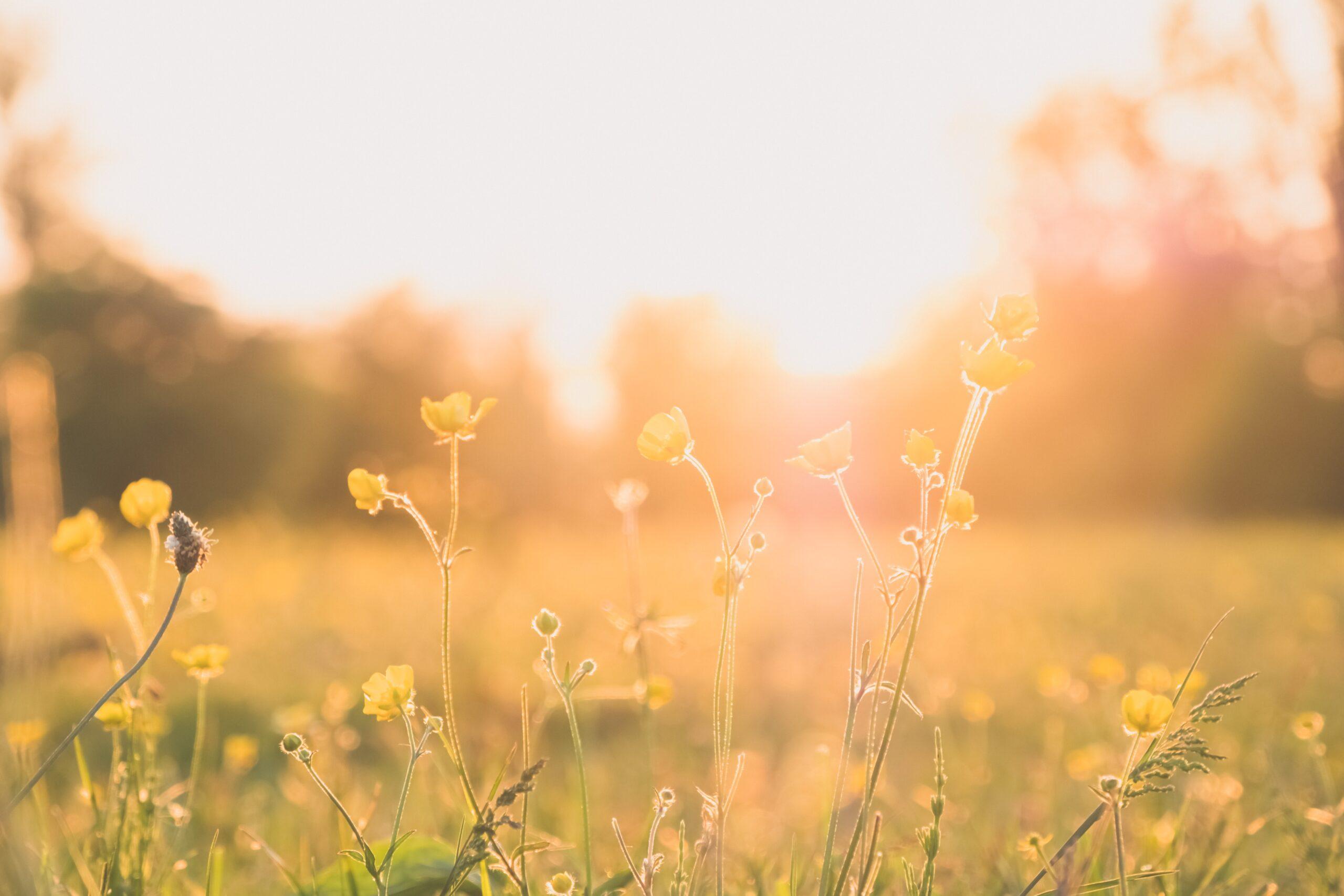 Primavera, tiempo de renacer